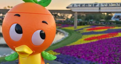 Orange Bird enjoying the view at the 2019 Flower and Garden Festival