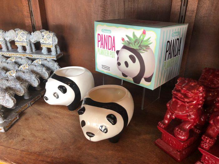 Popular Panda Picks At Disney S Animal Kingdom