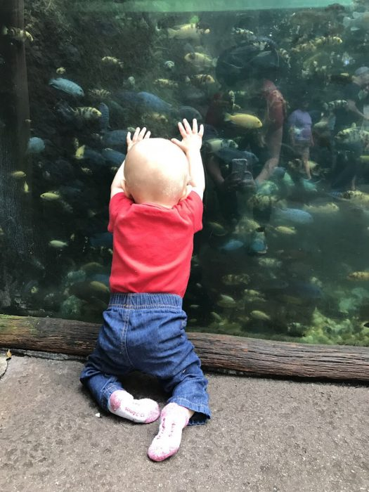A young child wearing blue denim jeans and a red t-shirt is on his knees facing an aquarium. He is staring intently at the fish swimming.