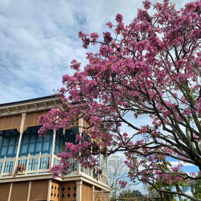 pink tree at Magic Kingdom