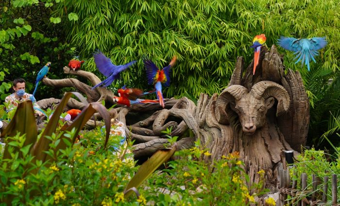 Top 5 Highest Rated Animal Kingdom Attractions for Adults