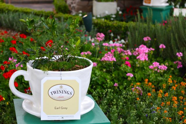 Twinings Tea Donation Request