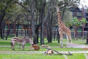 Animal Kingdom Villas Savanna