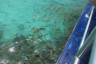 You are swarmed by fish during the feeding portion of the excursion. (View over the side of the boat.)