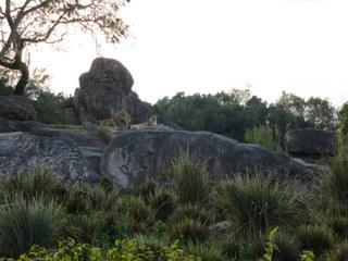 Morning EMH is a great time to ride the Kilimanjaro Safari at the Animal Kingdom. The critters are often quite active.