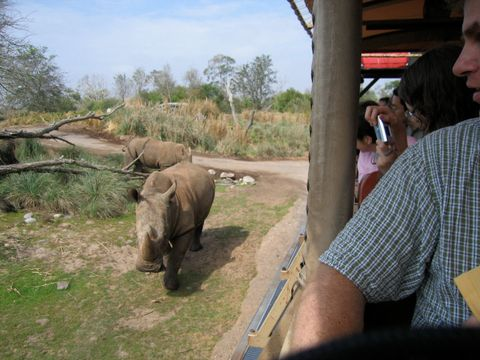 """Some folks consider the Animal Kingdom to be a """"half day"""" park and want to spend the rest of their time at a different park. You need a Park Hopper to do this."""