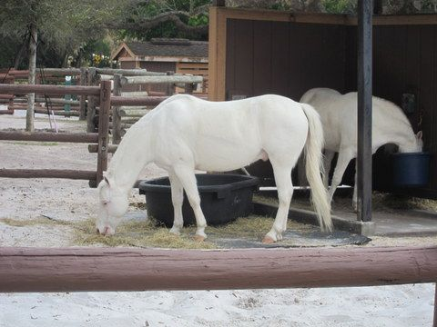 There's lots to do at Fort Wilderness, including a visit with Cinderella's ponies.