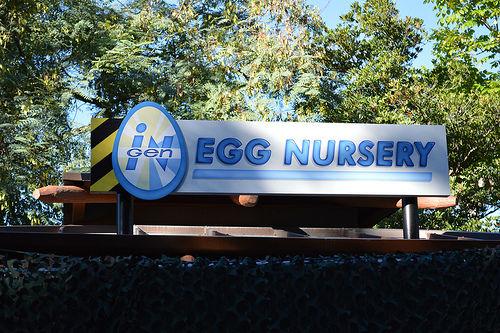 observations_eggnursery