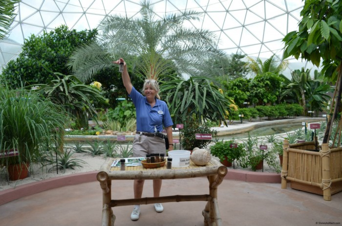 Behind the Seeds in the Land Pavilion of Epcot is a great way to spend the afternoon on a solo trip.