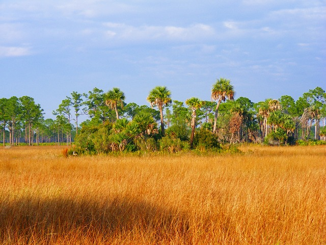Florida floodplains with hardwood hammocks are common to the Northern Everglades region, such as at the Disney Wilderness Preserve..