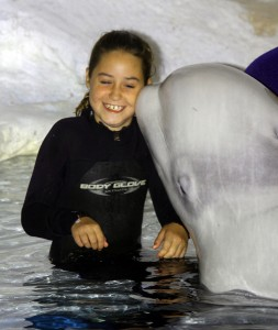 SeaWorld beluga whale Aurek and guest during the Beluga Interaction Tour. Photo by Thomas Cook