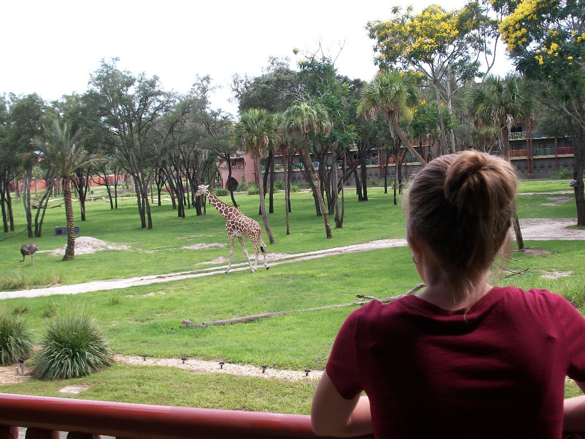 Review Of An Animal Kingdom Lodge Dvc Deluxe Studio Villa At Kidani