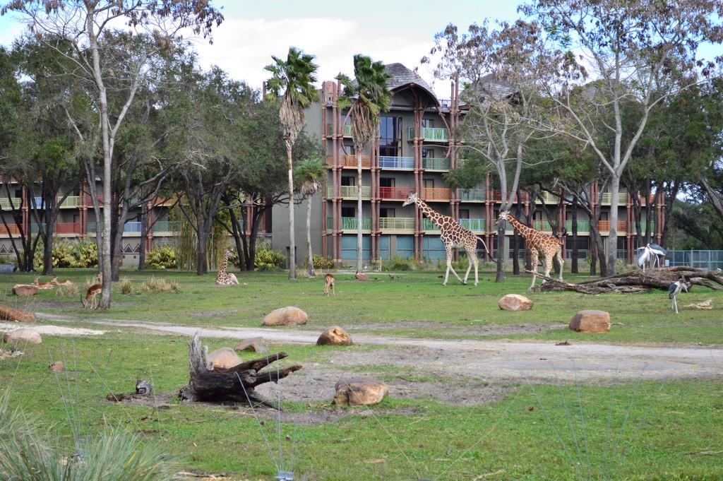 Six Reasons We Love Disney's Animal Kingdom Lodge