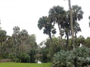 Palm Trees at Bok Tower - Natalie Reinert