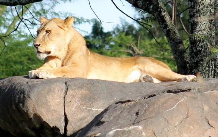Safaris_Wallen