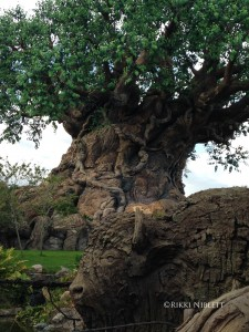 Disney's Animal Kingdom
