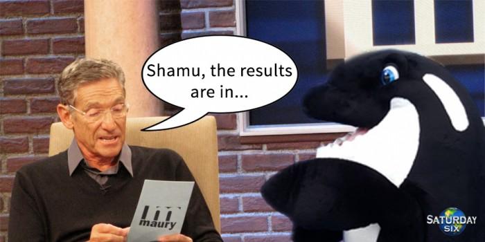 Shamu1