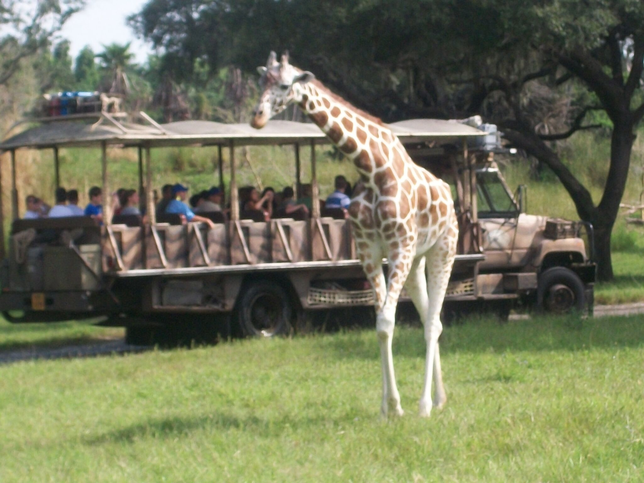 disney park strengths and weaknesses animal kingdom ak4