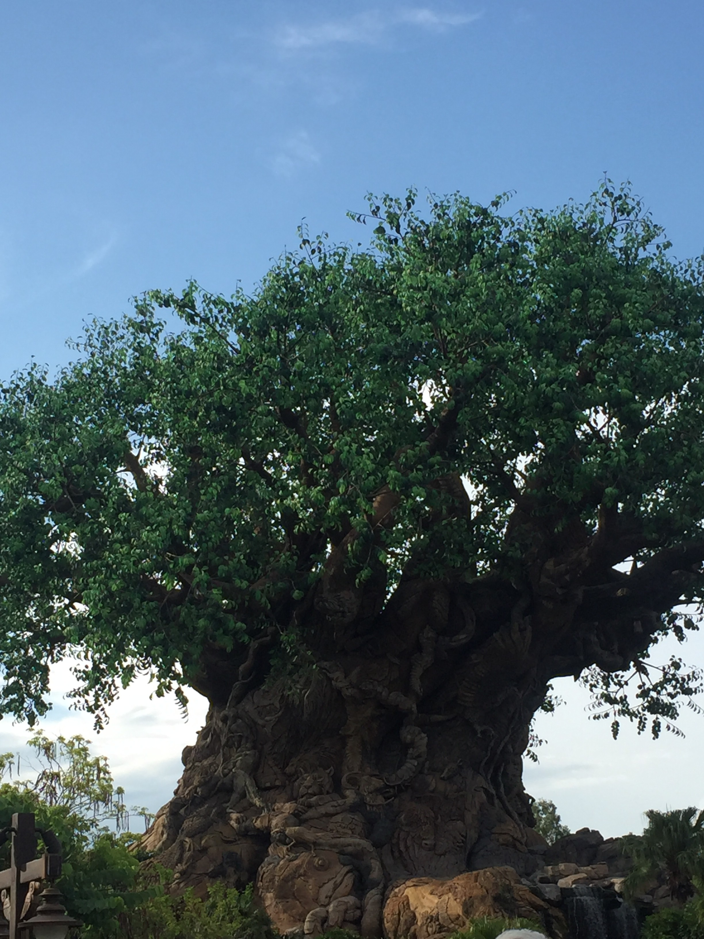 7 new things we didn\'t expect at Disney\'s Animal Kingdom ...