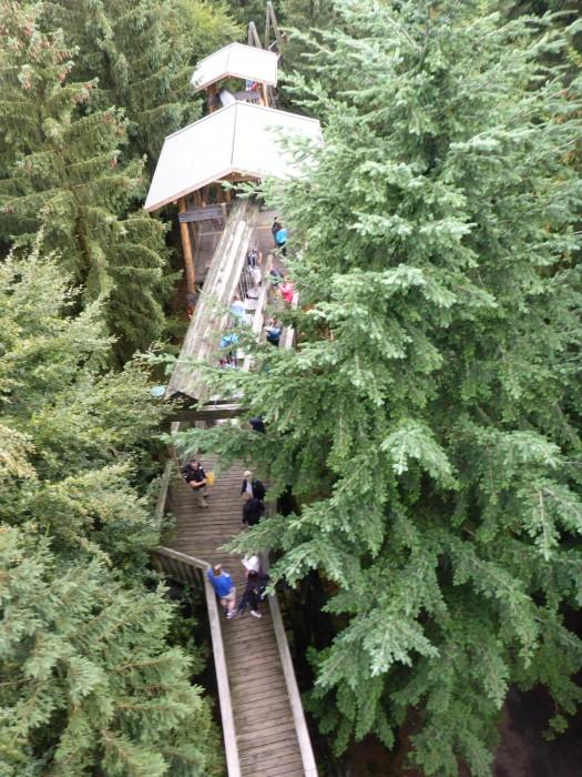 Walking in the treetops at Tree Path Kopfing.