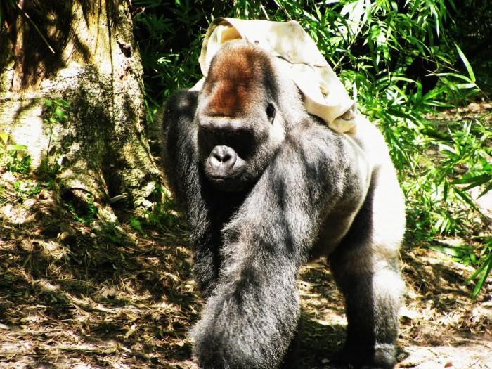 gorillafalls_grassey