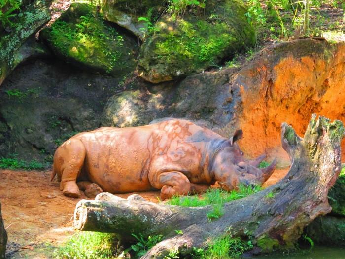 rhino_grassey