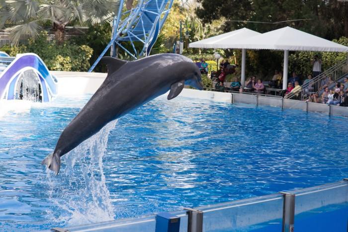 seaworld_dolphin_sperduto
