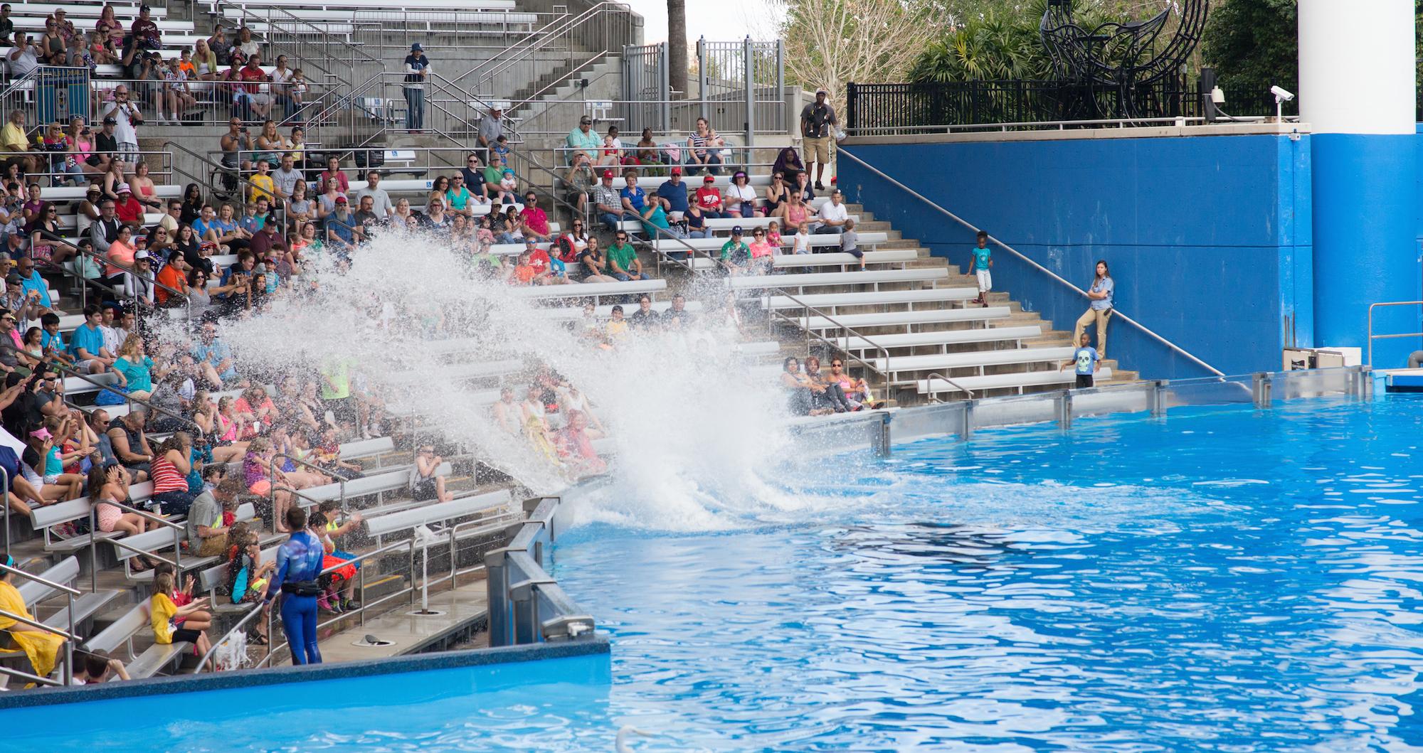 Six Reasons You Need To Check Out Seaworld Orlando
