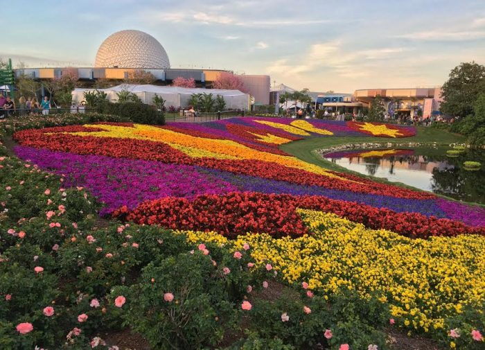 "The iconic ""flower blanket"" is one of the many favorite views of the Epcot Flower and Garden Festival."
