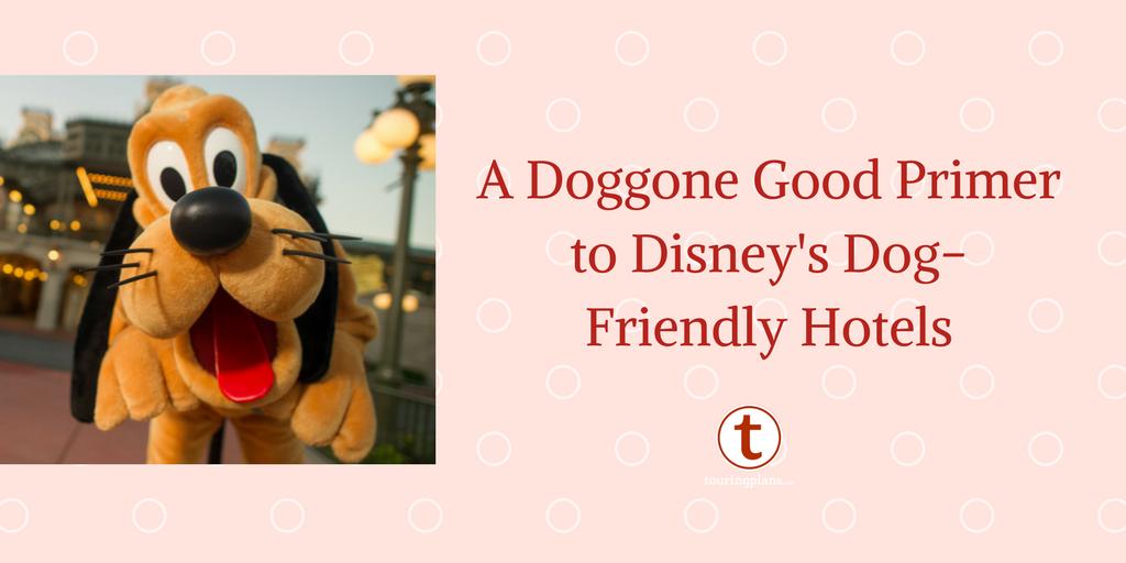 Dog Friendly Hotels In Walt Disney World