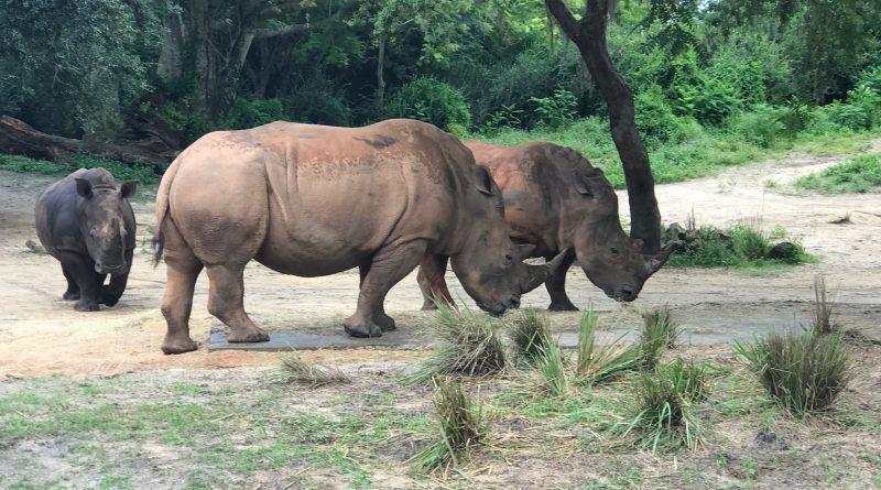 Up Close with Rhinos Tour